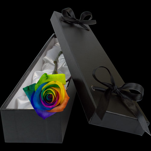 Luxury Happy (Rainbow) Rose