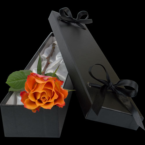 Luxury Single Orange Rose