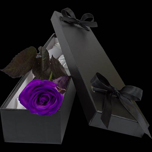 Luxury Purple Rose