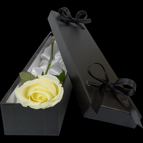 Luxury White Rose