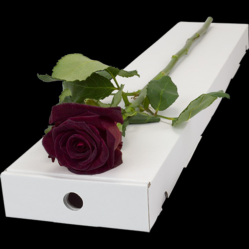 A Single Black Baccara Rose in a Classic Box