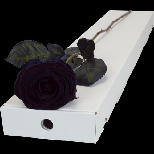 Letterbox Single Black (Dyed) Rose