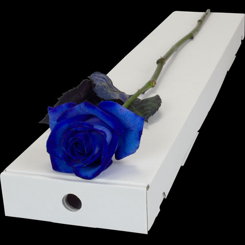 A Single Blue Rose in a Classic Box
