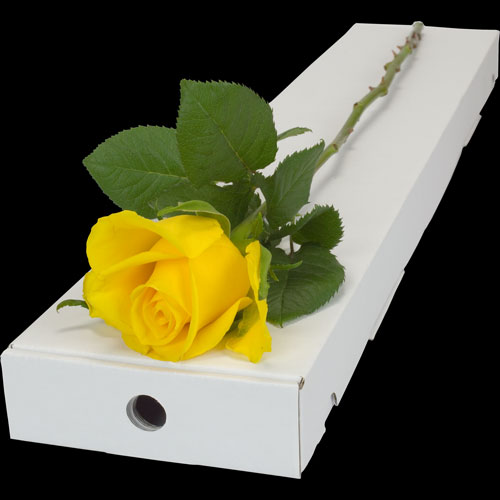 A Single YELLOW Rose in a Luxury Silk Lined Gift Box