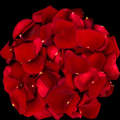 1 Jug of Fresh Red Rose Petals