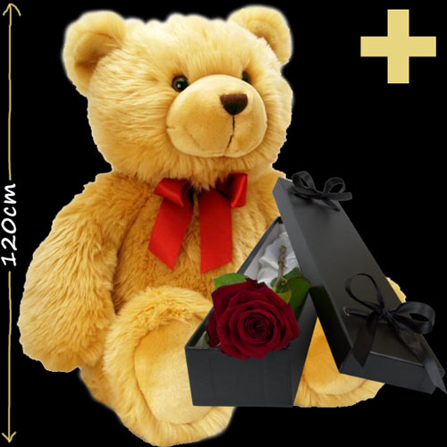 120cm Teddy and Free Single Rose in the colour of your choice