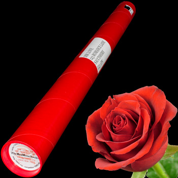 A Single Red Rose in a Postal Tube