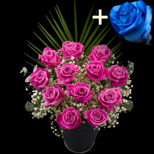A single Blue (Dyed) Rose surrounded by 11 Pink Roses