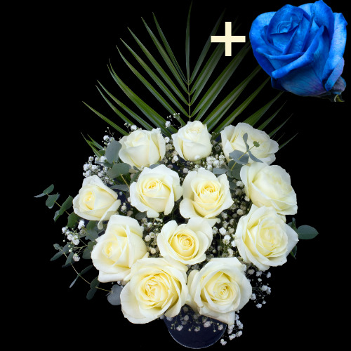 A single Blue (Dyed) Rose surrounded by 11 White Roses