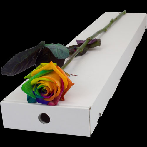 Send a single happy rainbow rose buy a single happy for Where can i buy rainbow roses in the uk