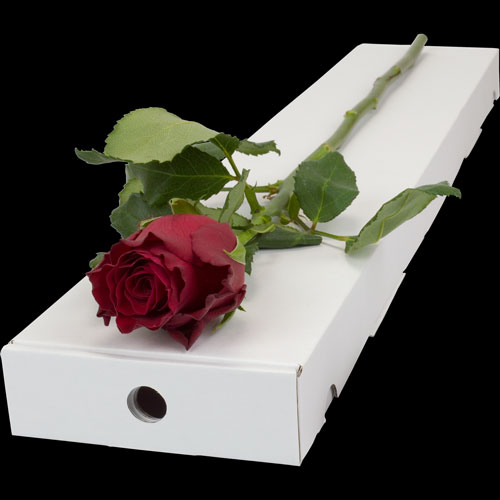 Letterbox Single Red Rose