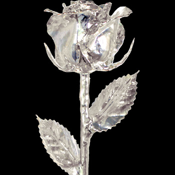 A 12Inch Silver Dipped Rose