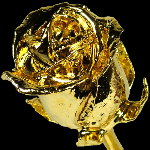 A single 17Inch Gold Dipped Rose surrounded by 11 Lilac Roses
