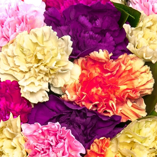 Cheerful Carnations Bouquet