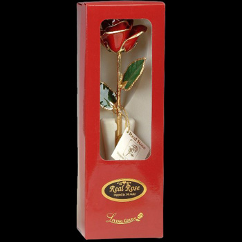 A Red 12Inch Gold Trimmed Rose