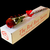 Single rose presented in a Classic Box